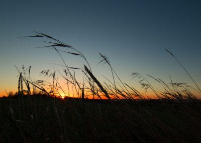 Efterår, græssernes knitren og solnedgangen over Thisted Bredning.